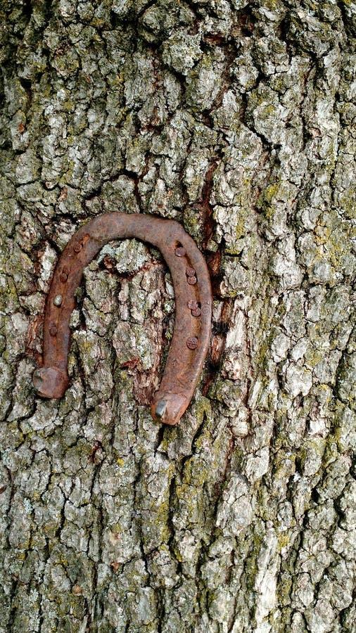 Horshoe drzewny dębowy szczęście obraz royalty free