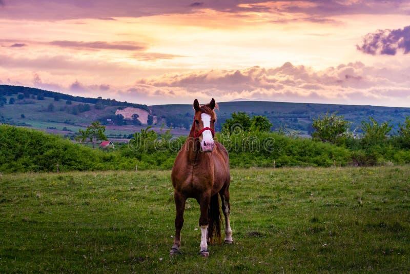 Horsing rond bij zonsondergang royalty-vrije stock fotografie