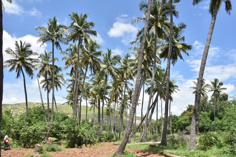 Horsley wzgórza, Andhra Pradesh, India zdjęcia stock