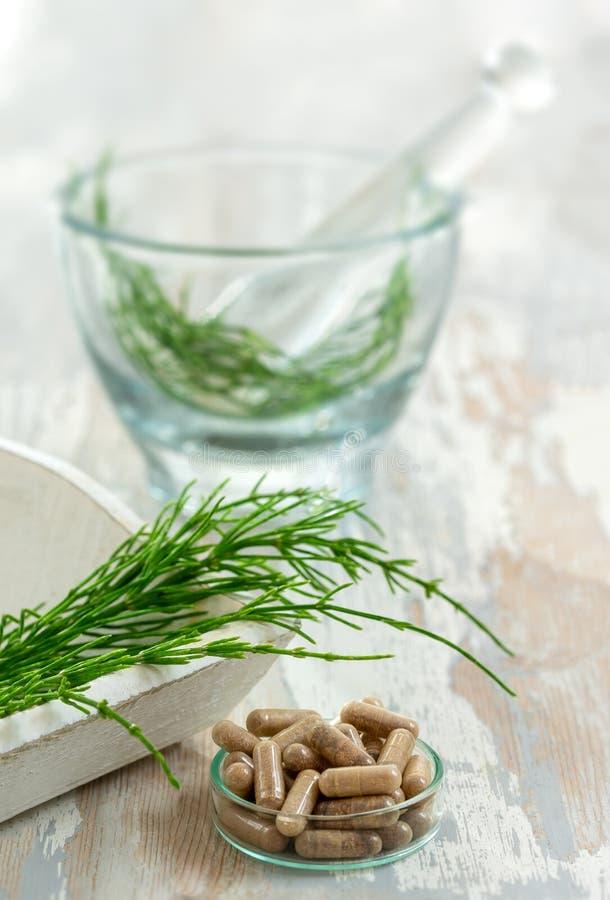 Horstail-Kräuterpflanzen mit alternativen Arzneimitteln, Kräuterpräparaten und Pflablet mit Glasmörtel lizenzfreie stockfotografie