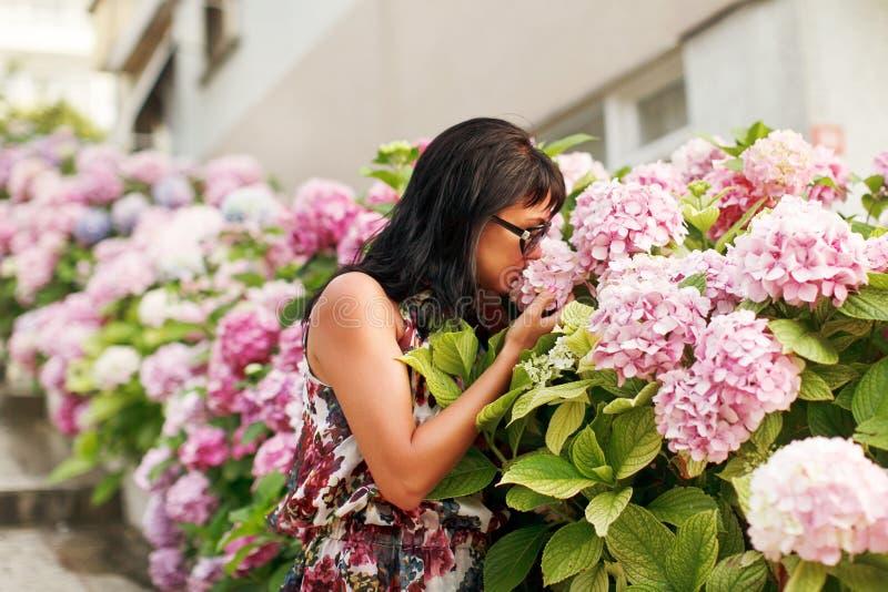 Hortênsia da mola dos toques das mulheres no jardim fotos de stock royalty free