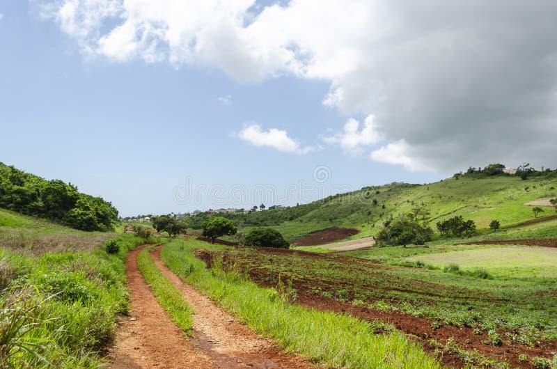 Hortaliças da paisagem bonita fotografia de stock