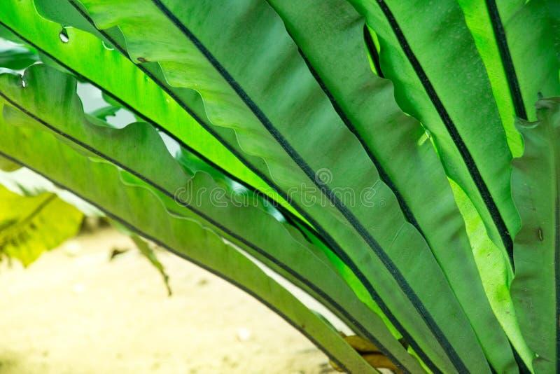 Hortaliças grossas da selva em um dia de brilho do sol brilhante com tempo morno quente O crescimento rápido move-se para cima e  fotografia de stock