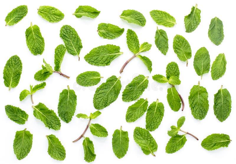 Hortelã fresca isolada no fundo branco Ajuste, as folhas imagens de stock royalty free