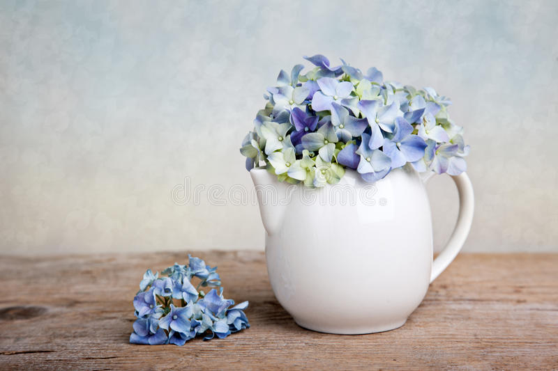 Hortensia Flowers. Still-Life with blue Hortensia Flowers in porcelaine can royalty free stock photography