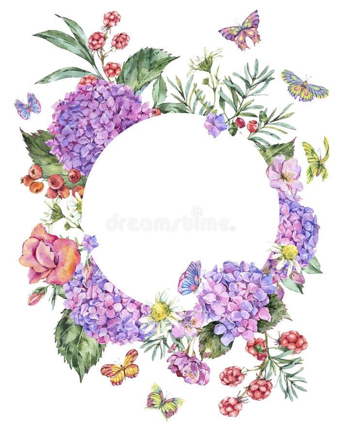 Hortensia, manzanilla, bayas, Wildflowers, Blackberry y mariposas rosados del verano de la acuarela ilustración del vector