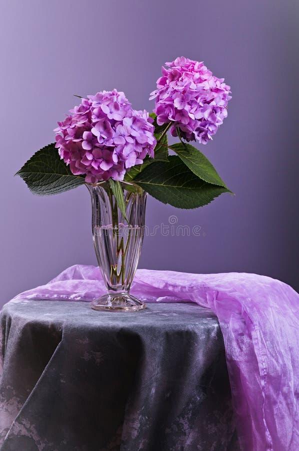 Hortensiablumen im Glasvase lizenzfreie stockfotografie