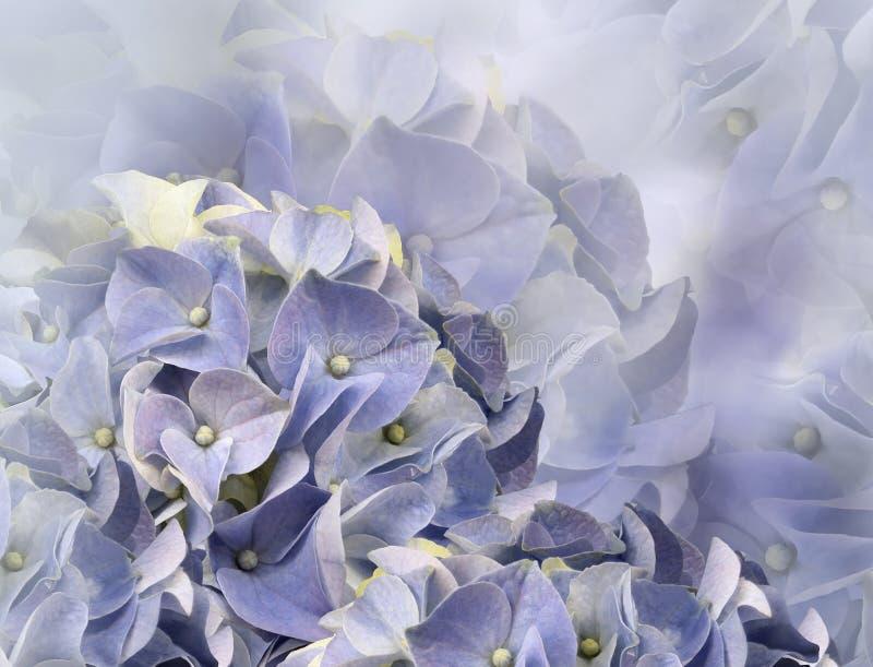 Hortensieblumen Hintergrund f?r eine Einladungskarte oder einen Gl?ckwunsch Blumencollage Tulpen und Winde auf einem wei?en Hinte stockfotografie