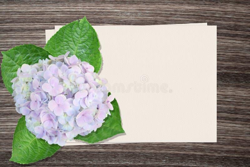 Hortensieblumen und und Papier auf hölzernem Hintergrund lizenzfreies stockbild