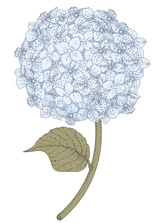 hortensja ilustracja wektor