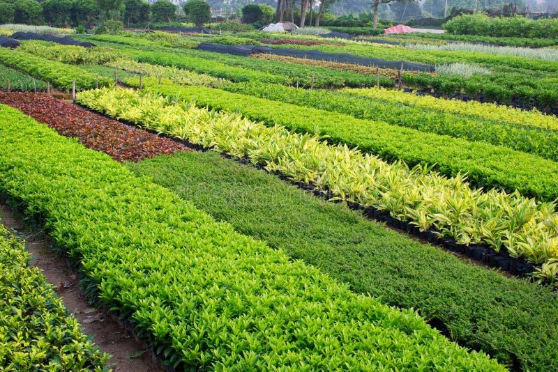 Horticultural lantgård arkivbilder