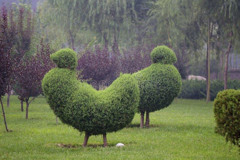 Download Horticultural model stock photo. Image of garden, horticulture - 27511786