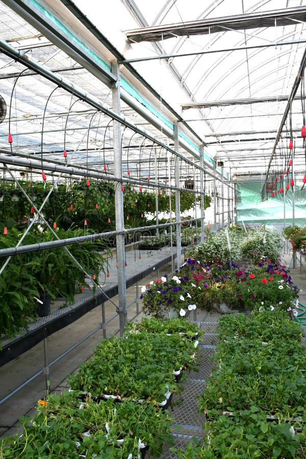 Horticulture. Rows of plants in green house royalty free stock photos