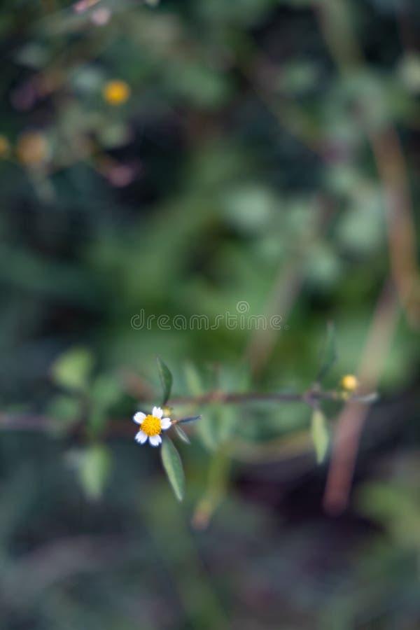 Horticulture sauvage minuscule à côté de la route photos libres de droits