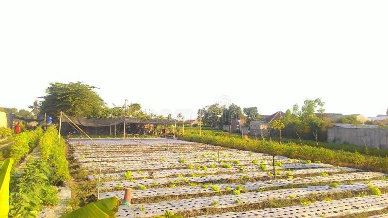Hortikultura di Lahan fotografia stock