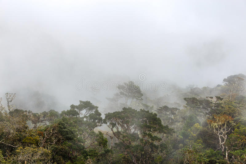Horton Plains National Park arkivfoton