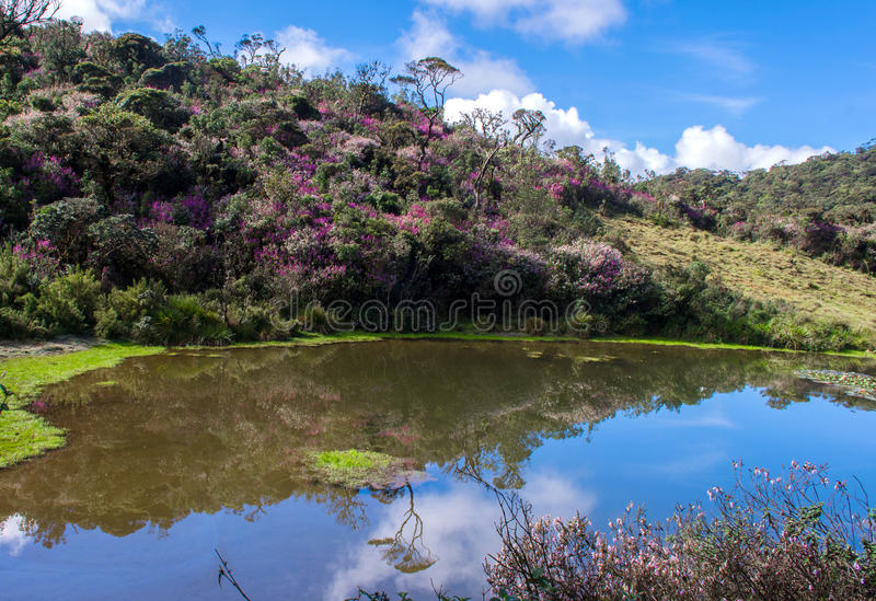 Horton Plains National Park, Sri Lanka imagem de stock