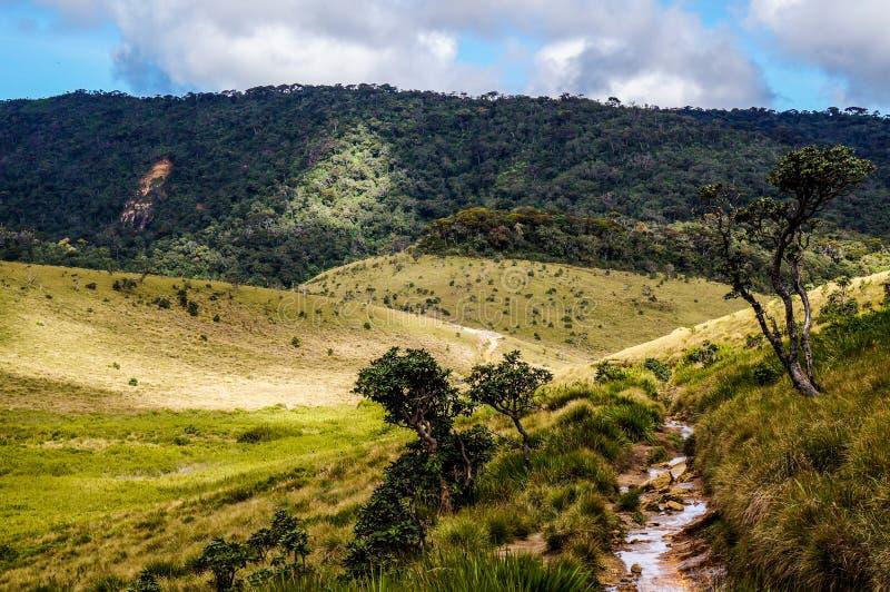 Horton plateau, Srilanka obrazy royalty free