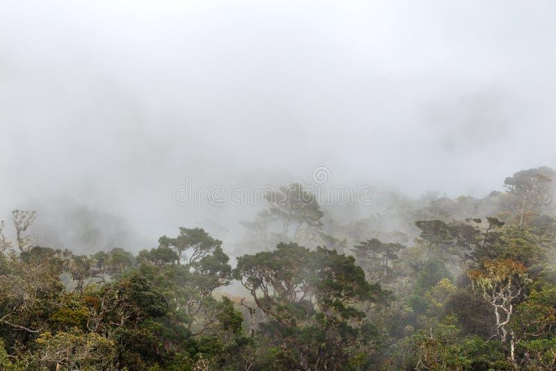 Horton równiien park narodowy zdjęcia stock