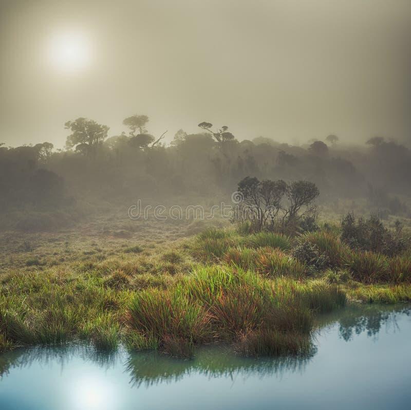 Horton równiny Wschód słońca fotografia stock