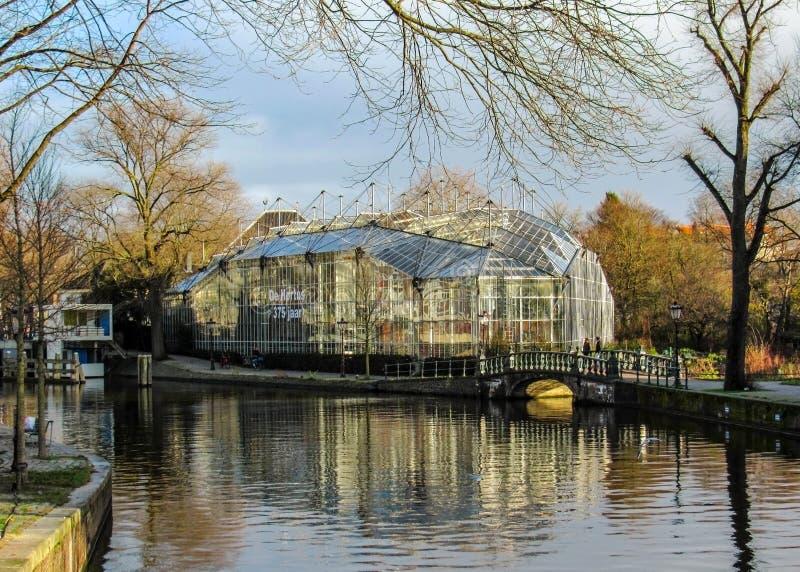Hortus Botanicus,植物园在阿姆斯特丹,荷兰,荷兰 免版税图库摄影