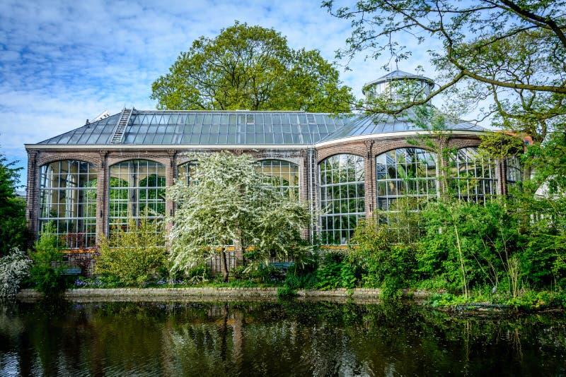 Hortus Botanicus,阿姆斯特丹 图库摄影