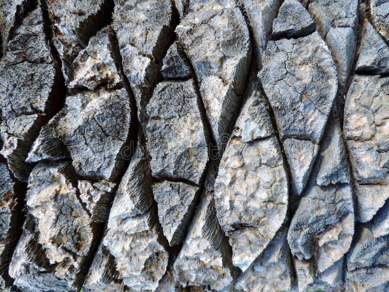 Horyzontalna fotografia drzewko palmowe barkentyny tekstura zdjęcie stock