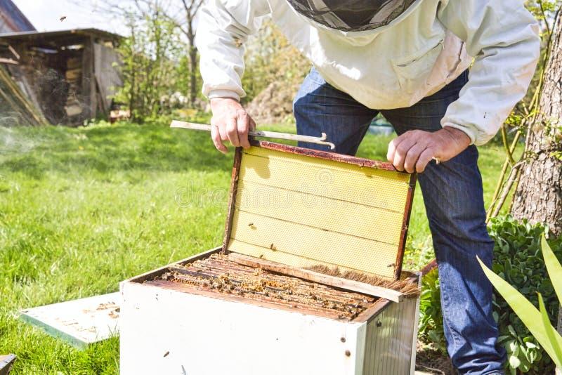 Horyzontalna fotografia pszczelarka w białej ochrona drelichu, kostiumu pozycji za ulem z i zdjęcie stock