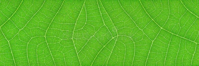 horyzontalna zielona liść tekstura dla wzoru i tła obrazy royalty free