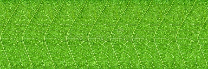 horyzontalna zielona liść tekstura dla wzoru i tła obraz royalty free