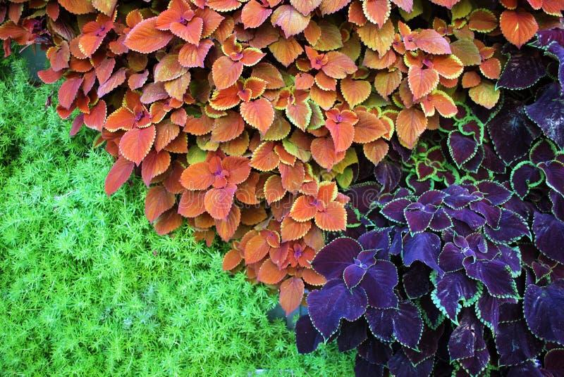 Horyzontalne ogrodowej rośliny ściany natury tło fotografia royalty free