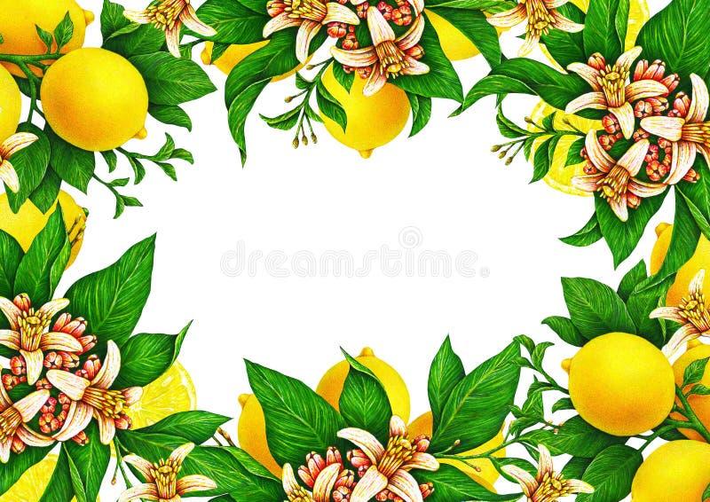 Horyzontalny szablon dla świątecznej ślubnej karty Owocowi motywy dla projekta handwork Cytryny z kwiatami w postaci ramy ilustracja wektor