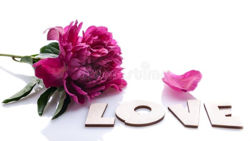 Horyzontalny sztandar: duża peonia miłość odizolowywająca na białym tle i słowo Romantyczny sk?ad obrazy stock