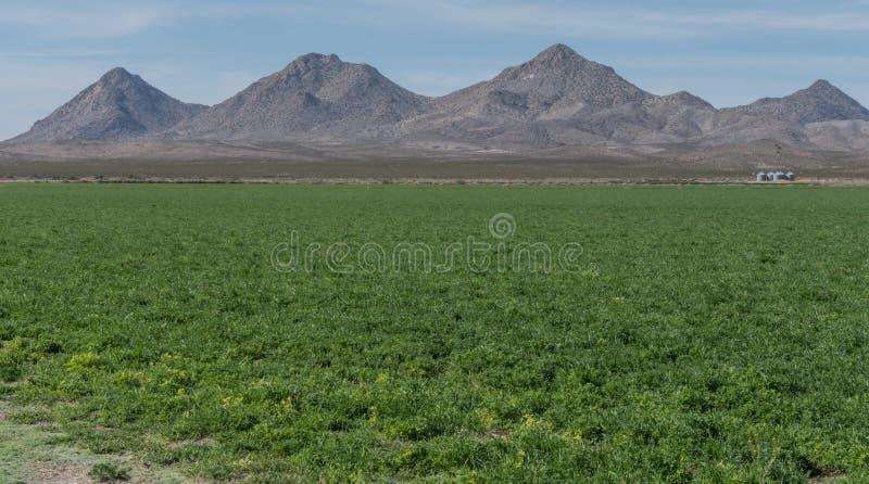 Horyzontalny Tres Hermanas pasmo górskie w południowo-zachodni Nowym - Mexico zdjęcie royalty free