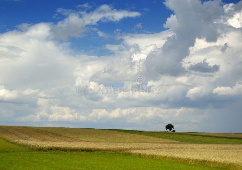 horyzontu drzewo krajobrazowy wiejski mały fotografia stock