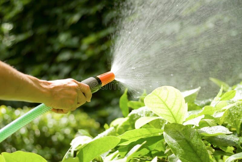 Download Hose with sprinkler stock photo. Image of brilliant, freshness - 5919490
