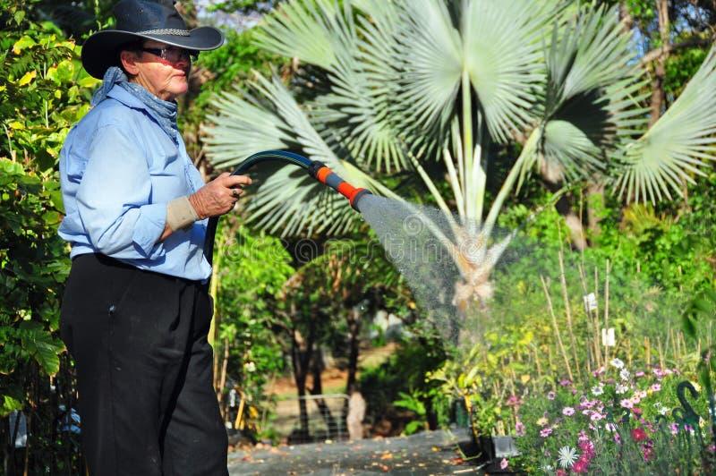 Hosing εγκαταστάσεις ποτίσματος βρεφικών σταθμών κήπων εγκαταστάσεων χειριστών ιδιοκτητών στοκ εικόνα με δικαίωμα ελεύθερης χρήσης