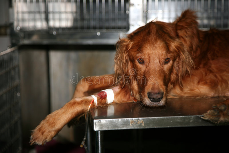 Hospital veterinario fotografía de archivo libre de regalías