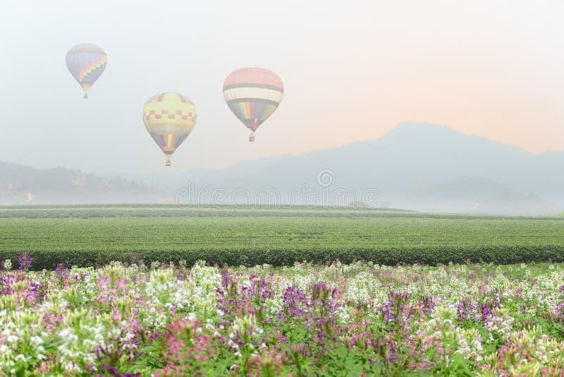 Hot air balloon over valley of tea plantation royalty free stock photos