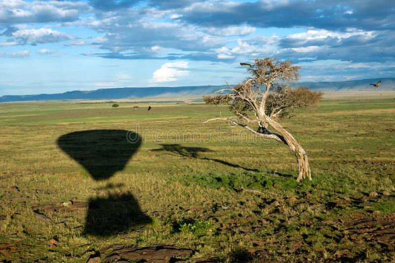 Hot air balloon ride on the big green plains of masai mara in kenya/africa. Bucketlist, travel and wilderness concept stock image
