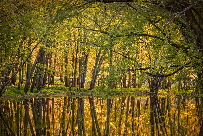 Hot Autumn colors. These magnificent reflections of the trees in the river is an invitation to calm, serenity and peace of soul. Magical moment of an autumn stock photos