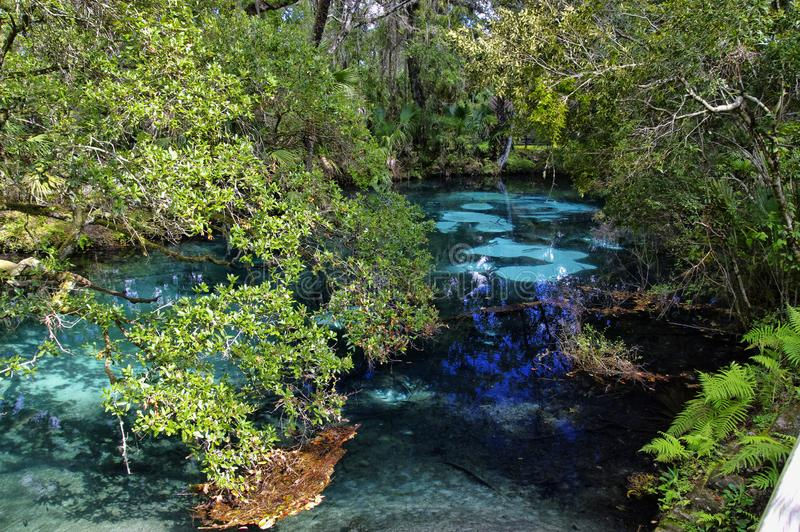 The hot blue and emerald geothermal pools. Juniper Springs Florida. stock photo