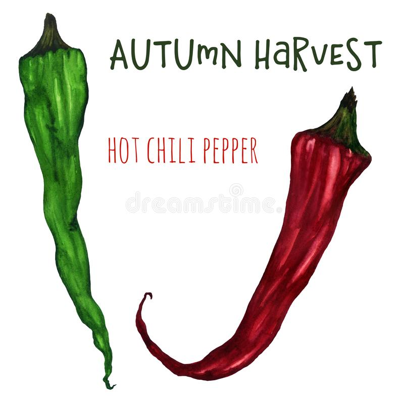 Hot chili peppers watercolor drawing on white background royalty free illustration