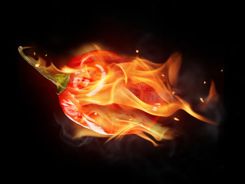 Hot chilli pepper. Burning red chilli pepper isolated on black background stock photos