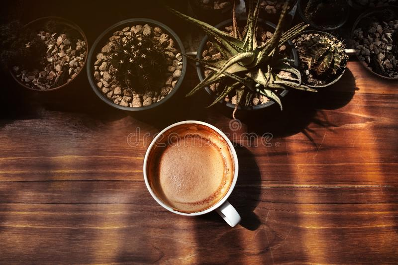 Hot Coffee Latte Cup on Wooden Table under with Natural Light. Top View. Surrounded by mini Cactus Tree Pot stock images