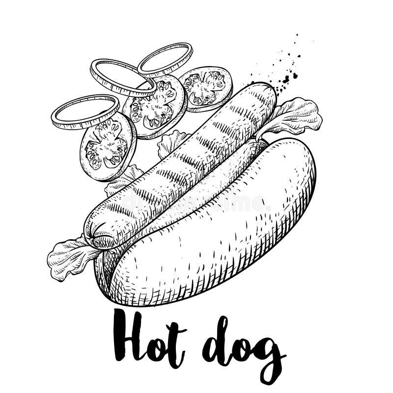 Hot dog con gli ingredienti di volo Illustrazione disegnata a mano degli alimenti a rapida preparazione di stile di schizzo Megli illustrazione vettoriale