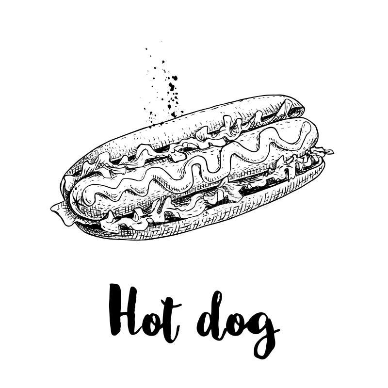 Hot dog nakreślenia ręka rysująca Fast food retro ilustracja Świeża babeczka z piec na grillu kiełbasy, musztardy, ketchupu i sał ilustracja wektor