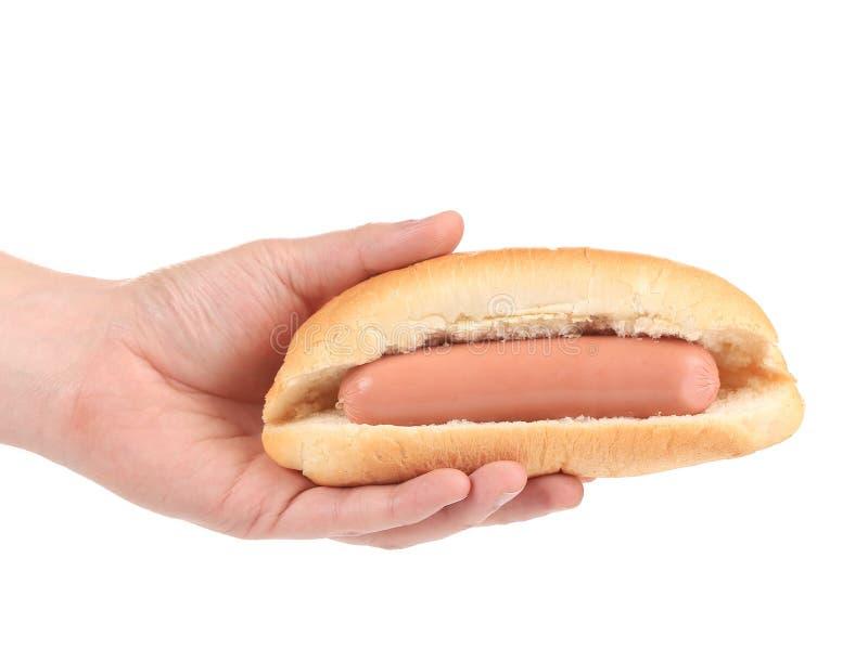 Hot dog z kiełbasianą rolką w ręce. zdjęcie royalty free