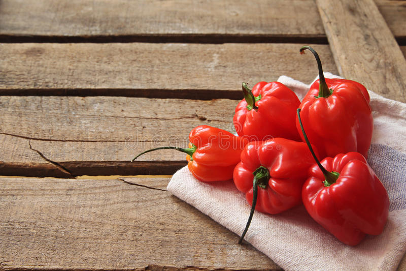Hot habanero chili stock photography