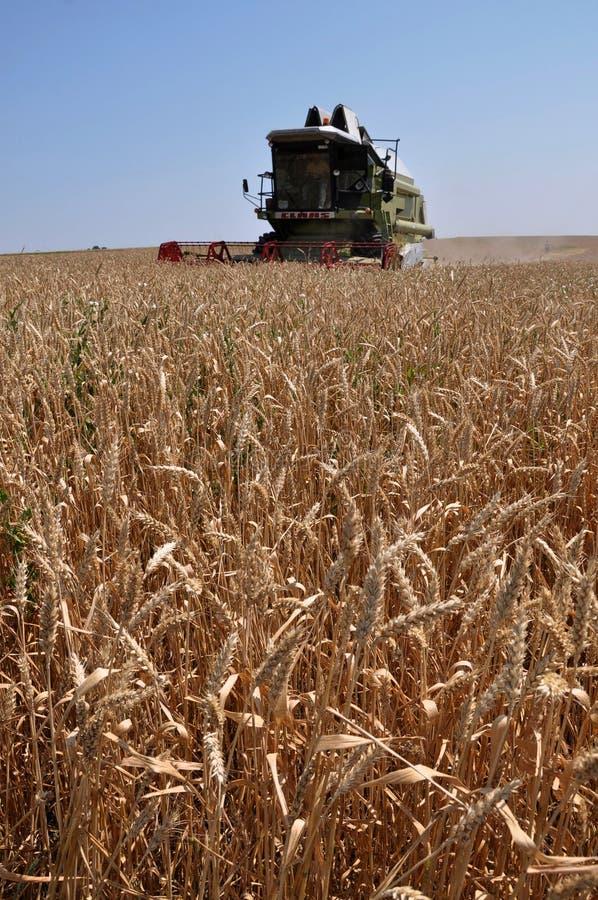 Hot Harvest time_2. Kolyndyany - Chortkiv - Ukraine - July 9, 2012. Weekdays hot harvest seasons in the private agricultural enterprise in the village Kolyndyany royalty free stock images